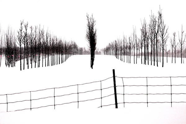 Snow Poster featuring the photograph White Lines Fenced In by Russell Styles