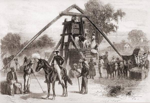 History Poster featuring the photograph Cotton Press In Operation In The South by Everett