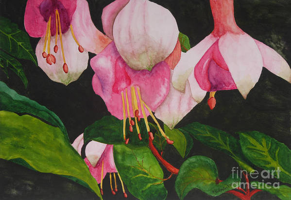 Fuschia Flower Poster featuring the painting Fuschia Pink Passion by Kimberlee Weisker
