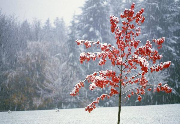 Winter Poster featuring the photograph Tree In The Winter by Natural Selection Craig Tuttle