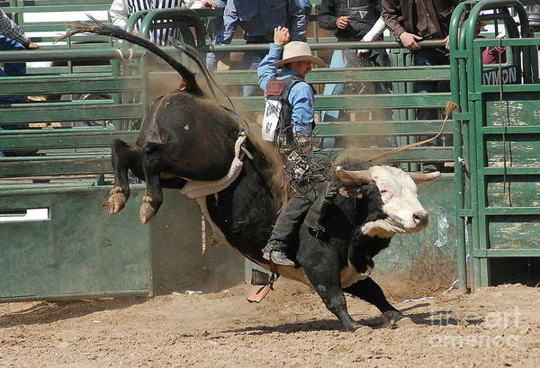 Rodeo Poster featuring the photograph Bucking Bulls 101 by Cheryl Poland