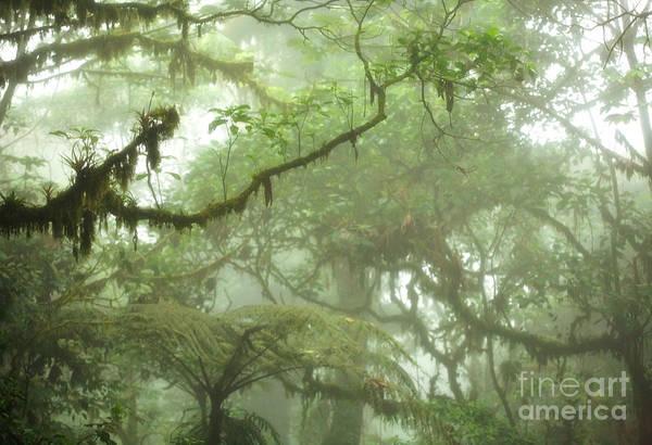 Rainforest Poster featuring the photograph Costa Rican Cloud Forest by Matt Tilghman