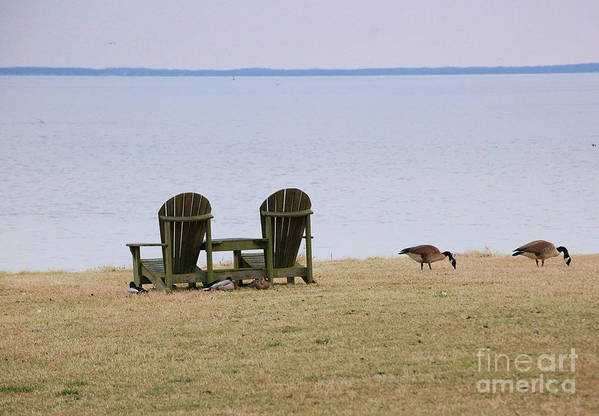 Chairs Poster featuring the photograph Relax by Debbi Granruth
