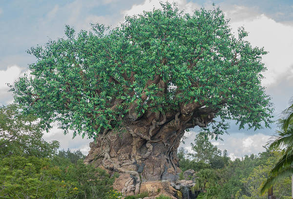 Tree Of Life Poster featuring the photograph Tree Of Life by Greg Thiemeyer