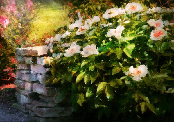 Savad Poster featuring the photograph Flower - Rose - By A Wall by Mike Savad