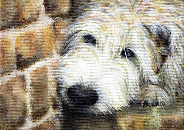Terrier Poster featuring the painting Soft Wheaten Terrier by Natasha Denger