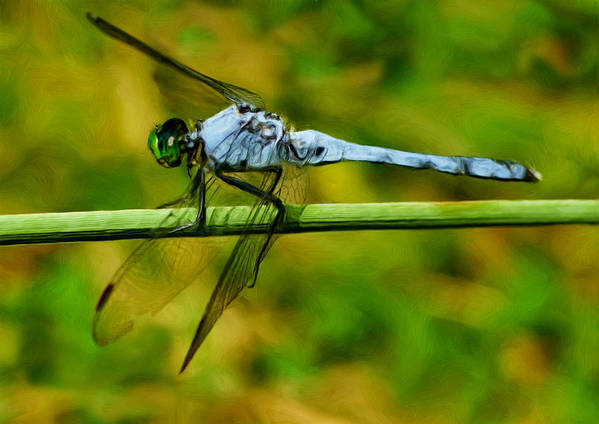 Dragonfly Poster featuring the photograph Dragonfly by Jack Zulli