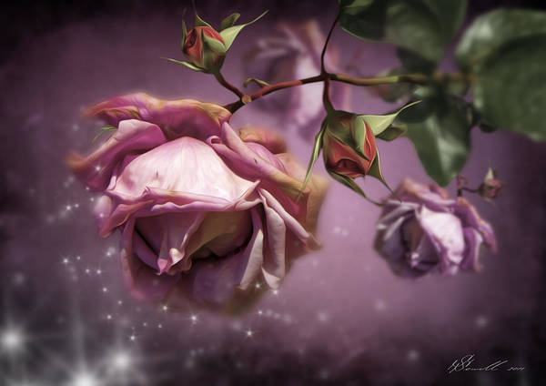 Anniversary Poster featuring the digital art Dusky Pink Roses by Svetlana Sewell