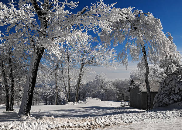 Winter Morning Poster featuring the photograph Winter Morning by Lois Bryan