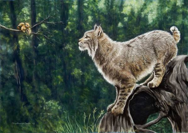 Bobcat Poster featuring the painting Eye To Eye by Stephanie Funke- Sweeten