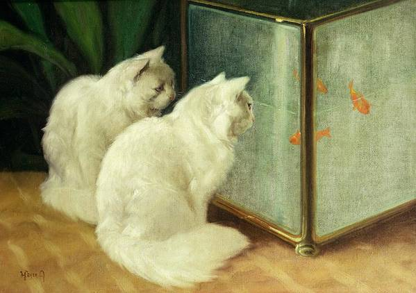 White Cats Watching Goldfish (oil On Canvas) By Arthur Heyer (1872-1931) Poster featuring the painting White Cats Watching Goldfish by Arthur Heyer