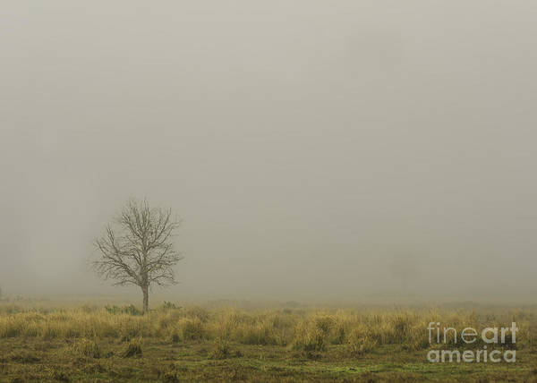 Nature Poster featuring the photograph A Tree In Sunrise Fog by Cindy Bryant