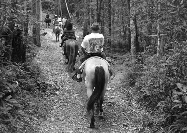 Horse Poster featuring the photograph Horse Trail by Frozen in Time Fine Art Photography