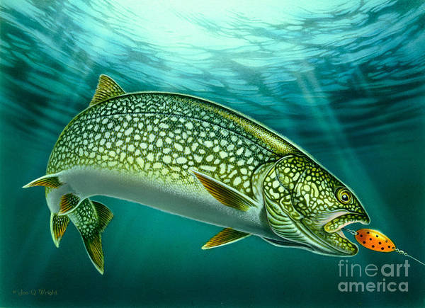 Jon Q Wright Poster featuring the painting Lake Trout And Spoon by Jon Q Wright