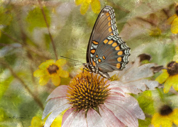 Butterfly Poster featuring the photograph Sweet Butterfly by Jeff Swanson