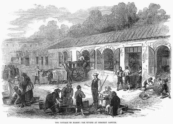 1871 Poster featuring the photograph France: Winemaking, 1871 by Granger