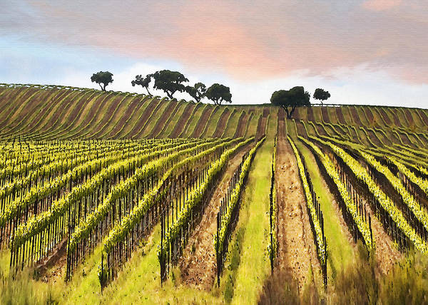 Santa Maria Poster featuring the digital art Spring Vineyard by Sharon Foster