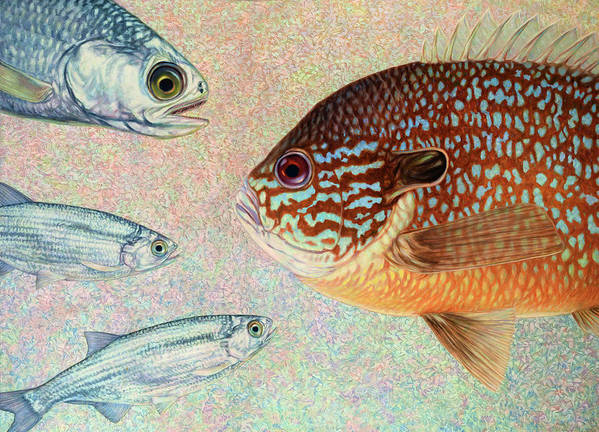 Fish Poster featuring the painting Mooneyes, Sunfish by James W Johnson