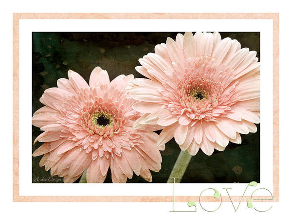 Gerber Poster featuring the photograph Gerber Daisy Love 5 by Andee Design