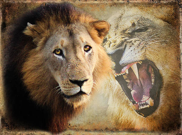 Photography Poster featuring the photograph Lion Profile by Ronel Broderick