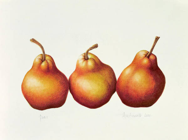 Botanical: Fruit Poster featuring the painting Pears by Annabel Barrett