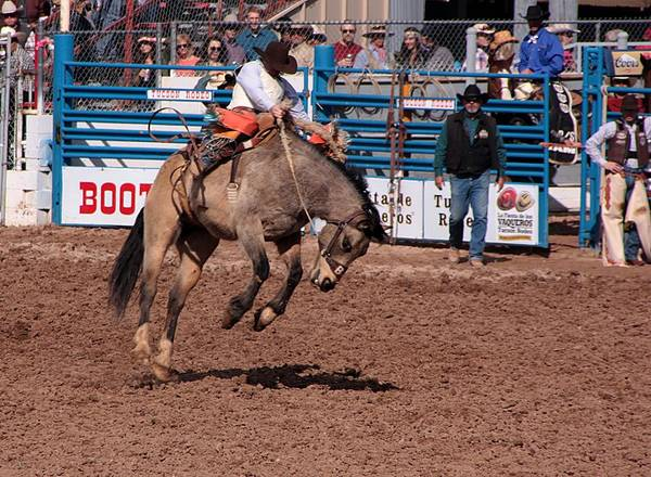 Rodeo. Rodeos Poster featuring the photograph The Toe Dancer by Joe Kozlowski