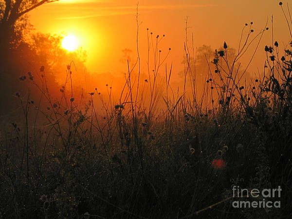 Nature Poster featuring the photograph Sunset by Odon Czintos