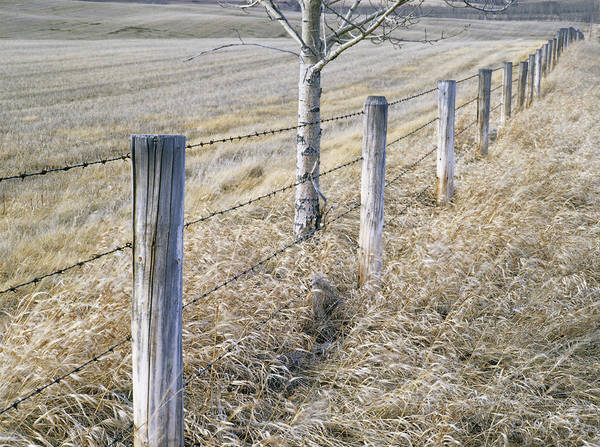 Light Poster featuring the photograph Fenceline And Cropland In Late Fall by Darwin Wiggett