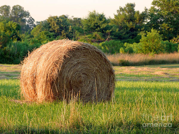 Hay Poster featuring the photograph Haybale by Louise Peardon