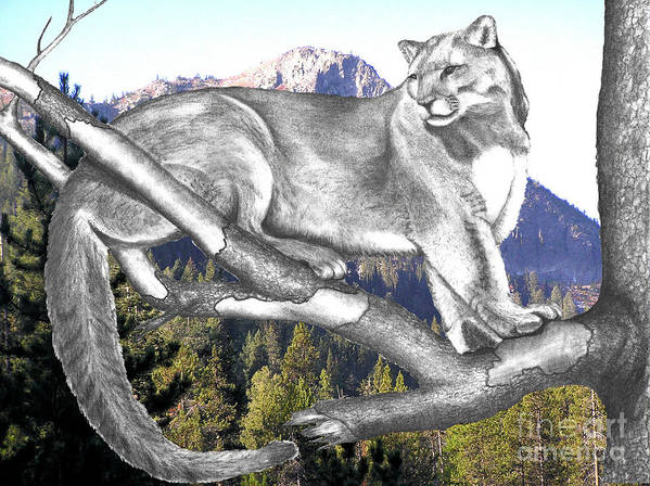Photo Manipulation Poster featuring the photograph Cougar Mountain by Russ Smith
