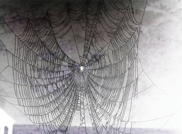 Spider Poster featuring the photograph The Web We Weave by Margaret Hamilton
