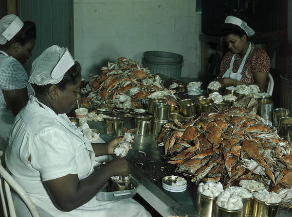 Indoors Poster featuring the photograph Women Pick And Pack Crab Meat Into Cans by Robert Sisson