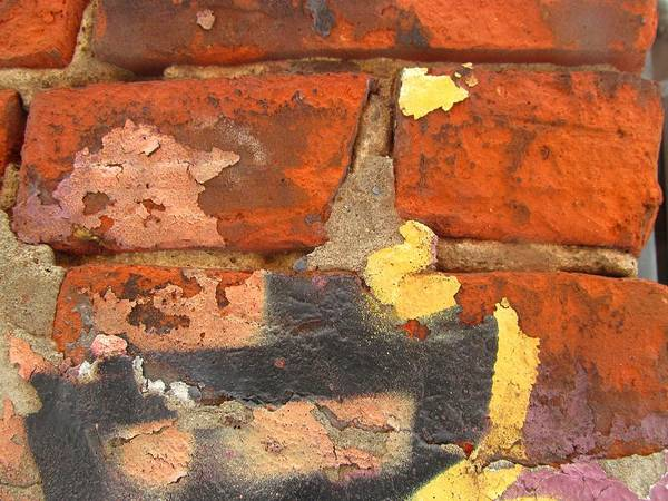 Color Wall Poster featuring the photograph Decay Beauty by Alfred Ng