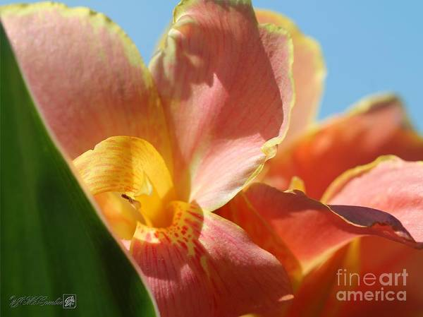 Dwarf Poster featuring the photograph Dwarf Canna Lily Named Corsica by J McCombie