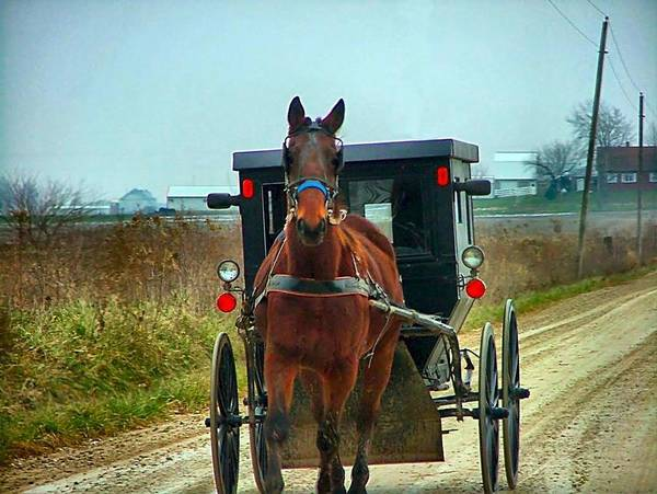 Amish Poster featuring the photograph Coming My Way by Julie Dant