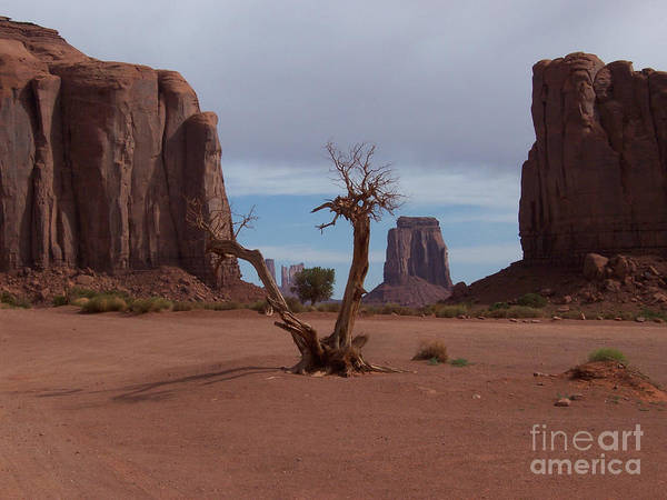 Monument Valley Poster featuring the photograph Dead-wood by Luke Moore