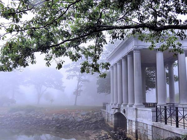 Dense Fog Poster featuring the photograph Dense Fog Plymouth Rock Canopy by Janice Drew