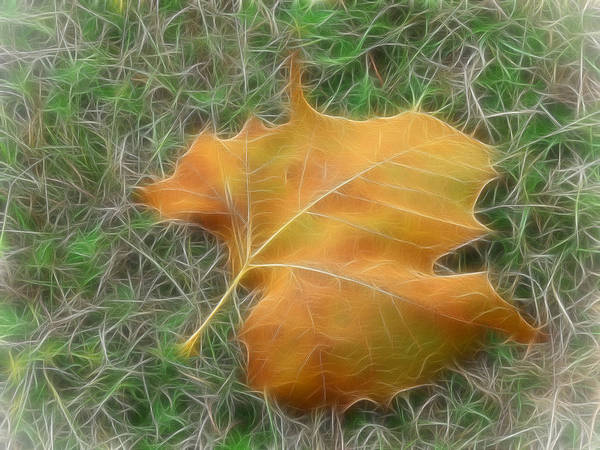 Leaf Poster featuring the digital art Fallen by Wendy J St Christopher