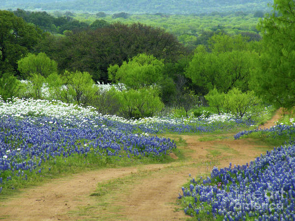 Bluebonnets Poster featuring the photograph From Here To There by Joe Jake Pratt