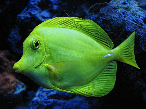 Fish Poster featuring the photograph Green Fish by Wendy J St Christopher