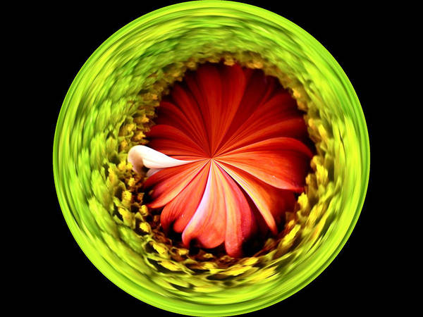 Flower Poster featuring the photograph Morphed Art Globe 1 by Rhonda Barrett