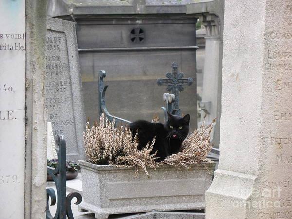 Paris Cemetery Art Poster featuring the photograph Paris Cemetery Cat - Le Chats Noir - Pere Lachaise - Black Cat On Grave Cemetery Art by Kathy Fornal