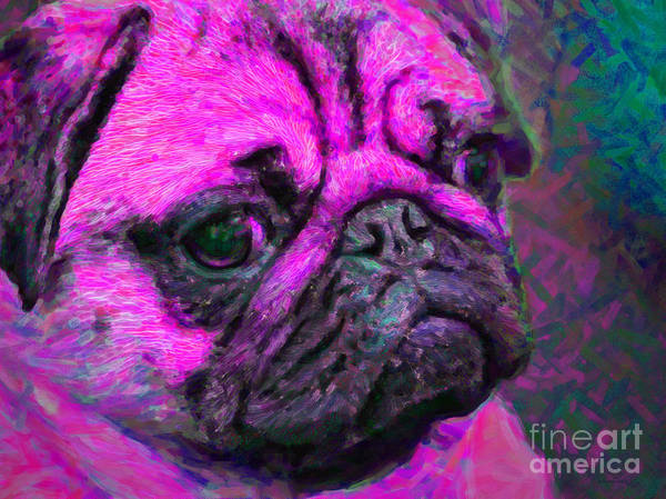Animal Poster featuring the photograph Pug 20130126v3 by Wingsdomain Art and Photography