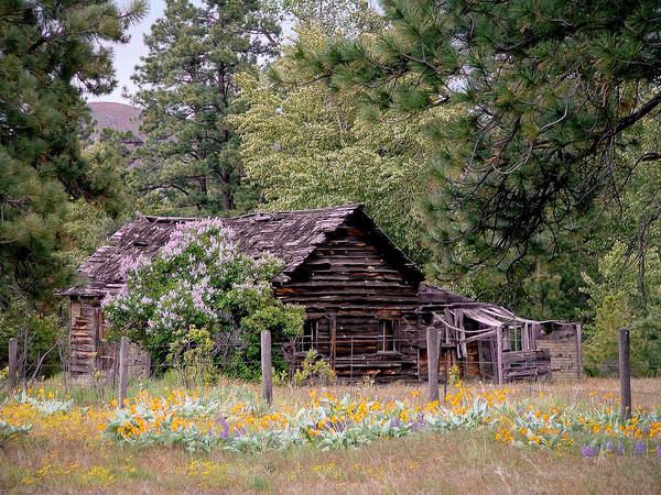 Cabin Poster featuring the photograph Rustic Cabin In The Mountains by Athena Mckinzie