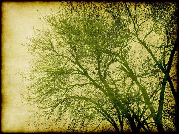 Tree Poster featuring the digital art Serene Green 1 by Wendy J St Christopher