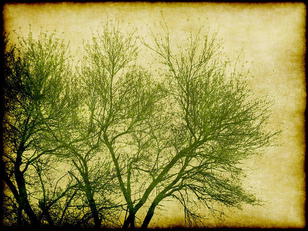 Tree Poster featuring the digital art Serene Green 2 by Wendy J St Christopher
