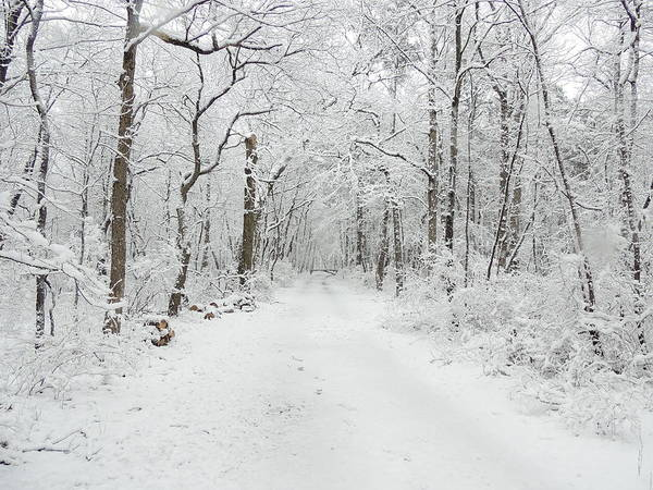 Snow In The Park Poster featuring the photograph Snow In The Park by Raymond Salani III