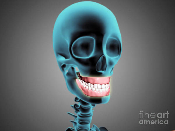 Biomedical Illustrations Poster featuring the digital art X-ray View Of Human Skeleton Showing by Stocktrek Images