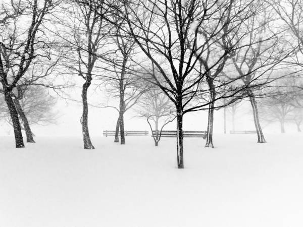 Horizontal Poster featuring the photograph Snowy Trees And Park Benches by Meera Lee Sethi