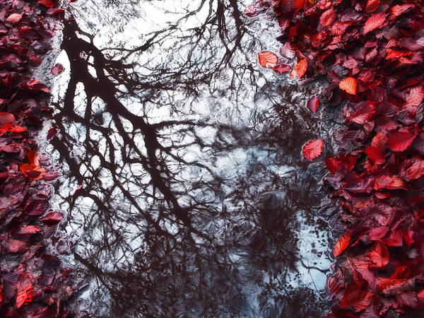Nature Poster featuring the photograph Autumn Reflections II by Artecco Fine Art Photography